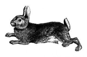 rabbit_lg